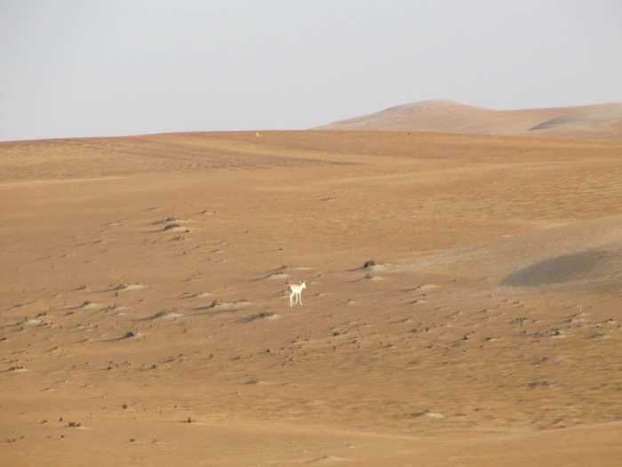 desert3