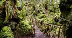 Puzzlewood Bridge image copyright Andy Cox