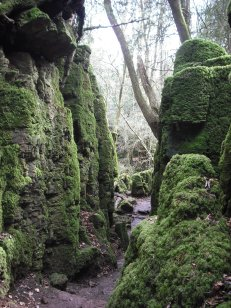 _Puzzlewood_(Andy_Dingley)